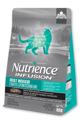 infusion-cat-healthy-adult-indoor
